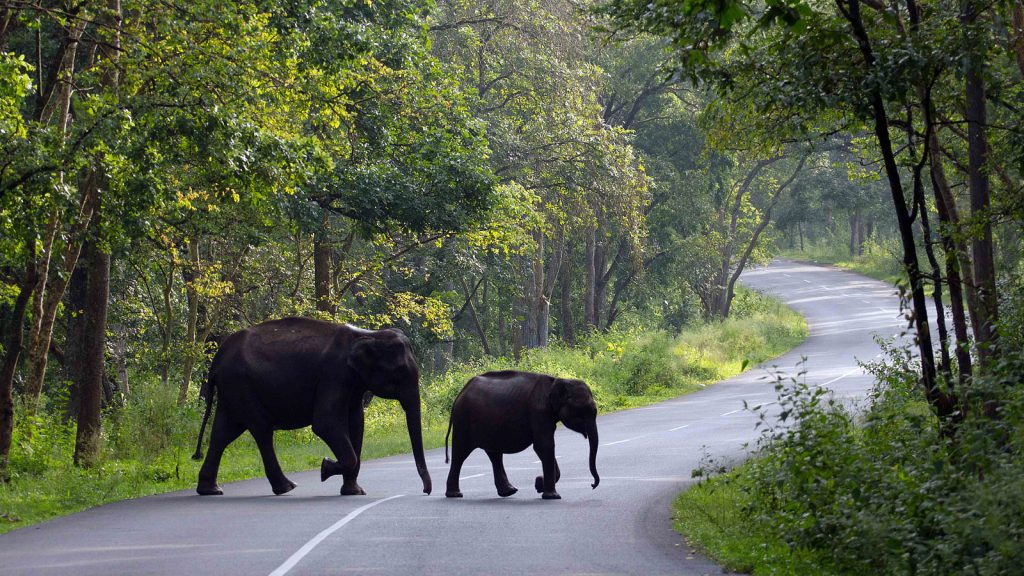 Wayanad Road